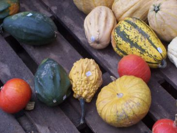 Kürbis - das beliebte Herbstgemüse | SCHÖNES ZUHAUSE