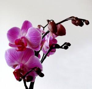 Zimmerpflanzen - die Würze beim Dekorieren | SchoenesZuhause.com