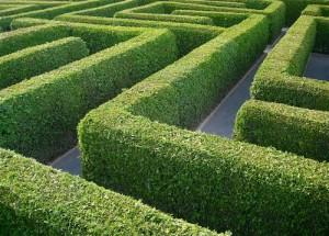 Wie pflanzt man eine schnell wachsende Hecke? | SchoenesZuhause.de