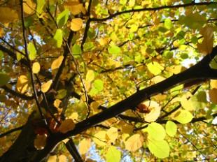 Spätsommer und Herbst für günstige Kredite nutzen | SchoenesZuhause.de