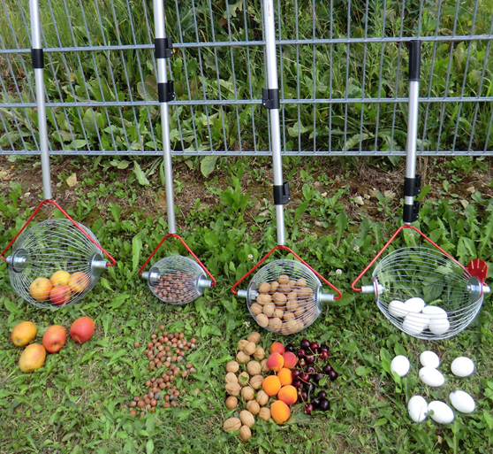 Der Rollblitz sammelt rückenschonend Äpfel, Nüsse und Co. Es gibt ihn in verschiedenen Ausführungen. Foto: djd/Feucht Obsttechnik GmbH