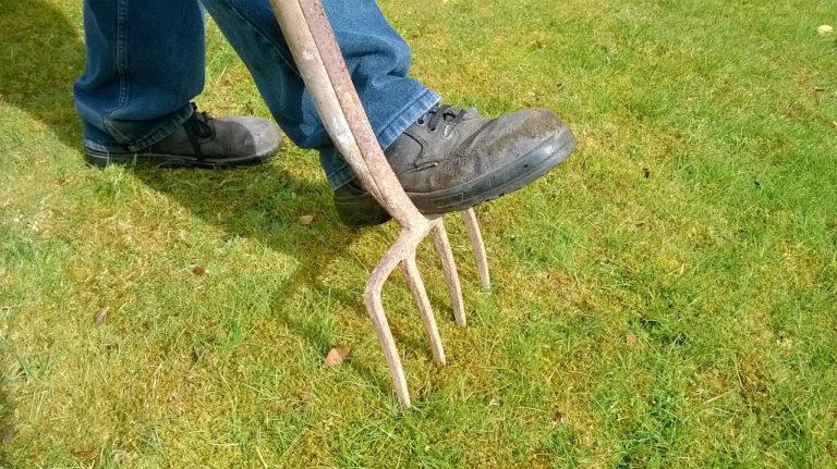 Mit der Rasenpflege sollte rechtzeitig begonnen werden. Bildquelle: pixabay.com © EugenesDIYDen (CC0 1.0).