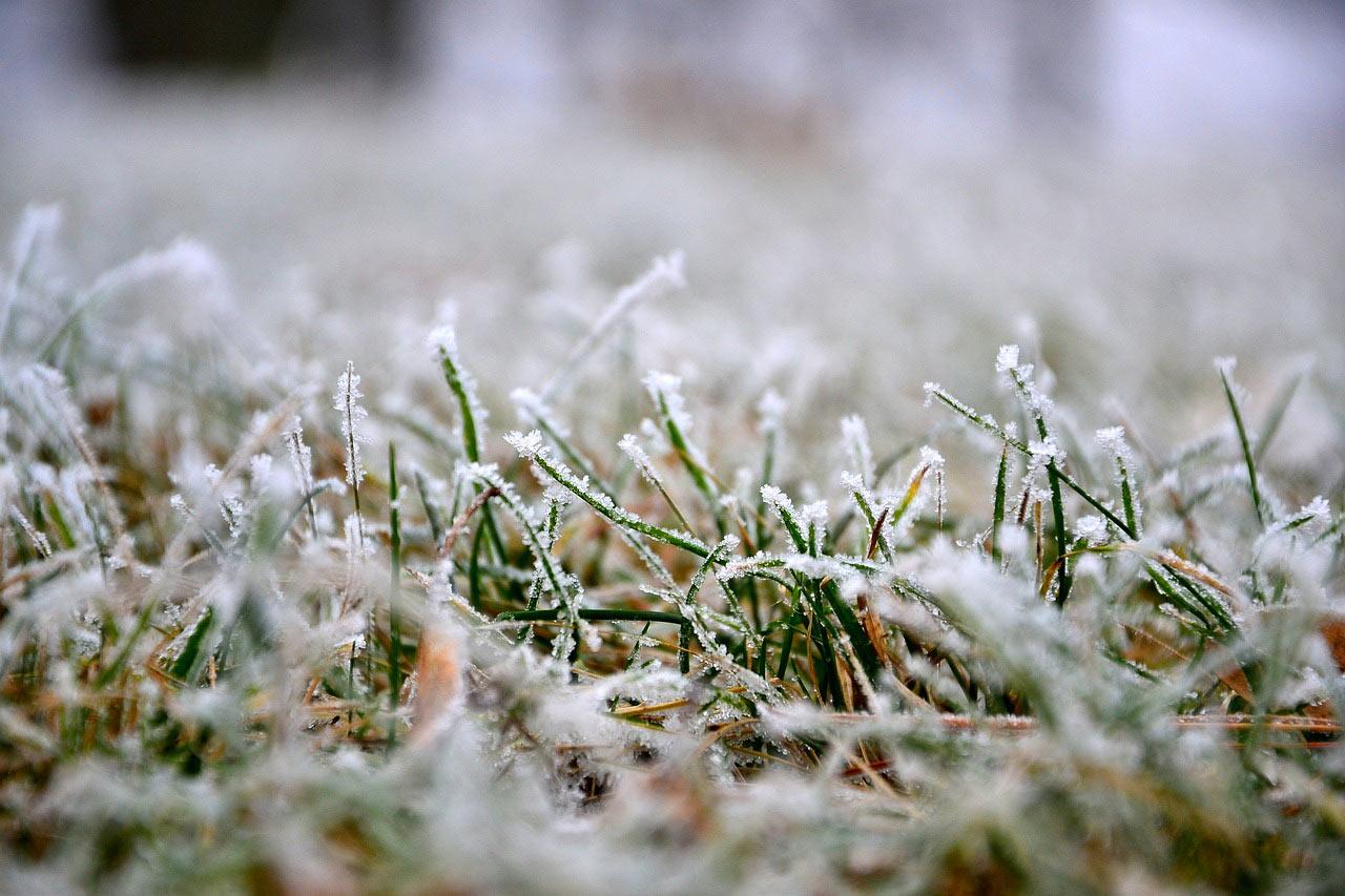 Der kalte Winter hinterlässt auf Grasflächen spuren. Bildquelle: pixabay.com © renarde_12 (CC0 1.0).