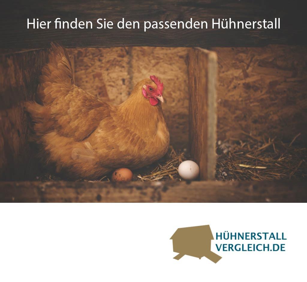 Hühnerstall Vergleich