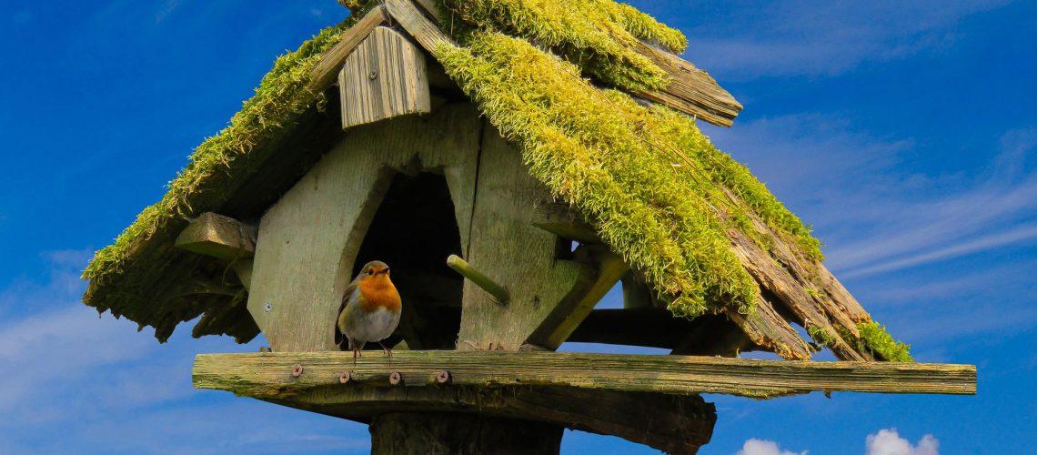 Vogelhaus selber bauen | SCHÖNESZUHAUSE